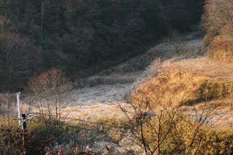 2014-12・31 霜の里山 (1).JPG