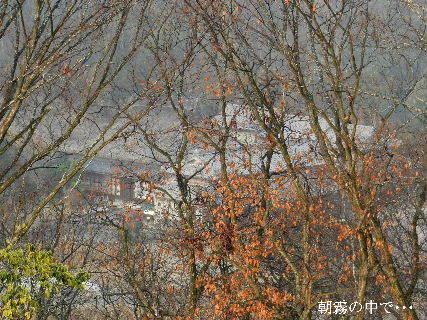 2014-12・30 朝霧の中で・・・.JPG